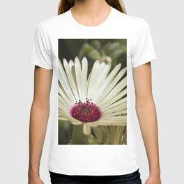 Livingstone Daisy - Glowing T-shirt