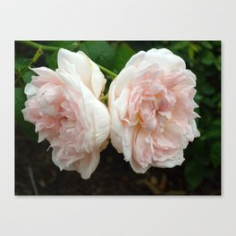 Couple of Roses Canvas Print