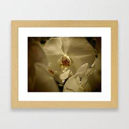 Orchid II Framed Art Print