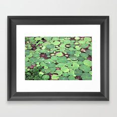 Nymphaeaceae Framed Art Print