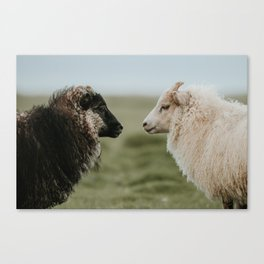 Sheeply in Love - Animal Photography from Iceland Canvas Print