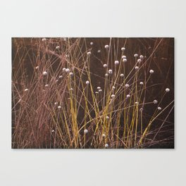 Silver buttons Canvas Print