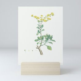 Sedum Aizoides (Yellow Saxifrages) from Histoire des Plantes Grasses (1799) by Pierre-Joseph Redouté Mini Art Print