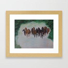 Herd of horses in canter Framed Art Print