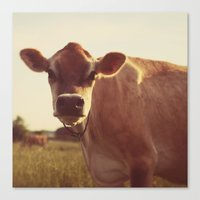 cow Canvas Prints featuring cow by Beverly LeFevre
