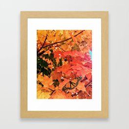 Butterfly in Fall  Framed Art Print