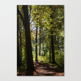 Woodland Mood Canvas Print