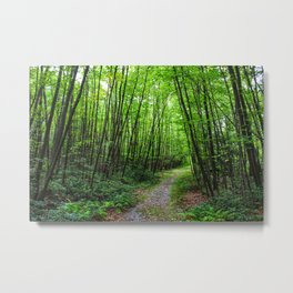 Forest path near Crater Lake, NJ Metal Print