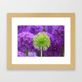 Violet green flower Framed Art Print