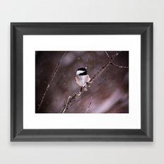 Chickadee in a Flurry Framed Art Print