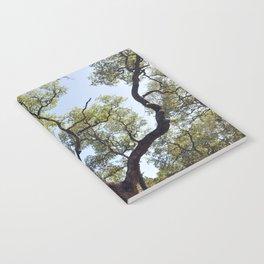 Live Oaks Notebook