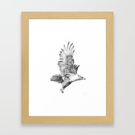 Red Tailed Hawk in Flight #2 Framed Art Print