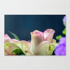 Softness of a rose Canvas Print