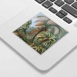 Vintage Fern and Palm Tree Art - Haeckel, 1904 Sticker