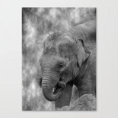 Hi Way Calf  Canvas Print