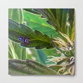 Guardian of the plants Metal Print
