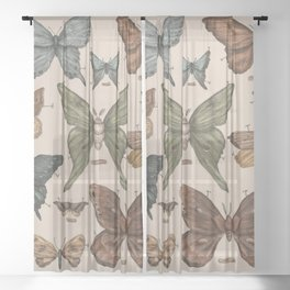 Butterflies and Moth Specimens Sheer Curtain