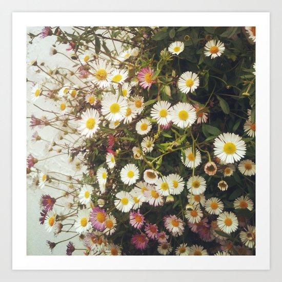 Wall of Daisies Art Print