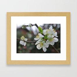 White Blossoms (*Koinonia*) Framed Art Print