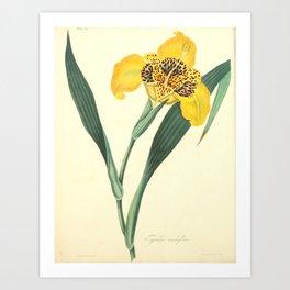 Roscoe, Margaret, 1786, 1840, Floral, Illustrations, of, the, Seasons, 1831, Delphinium, Grandifloru Art Print
