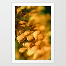 Hydrangea Detail in Autumn - Warm Colorful Flower Print - Macro Photography Mixed -Colored Wall Art Art Print