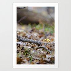 Seedling - A Art Print