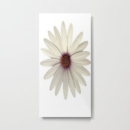 Symmetrical African Daisy with White Petals Metal Print