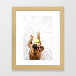Puggle Dog with Tennis Ball Framed Art Print