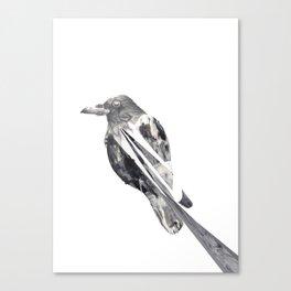 untitled crow Canvas Print
