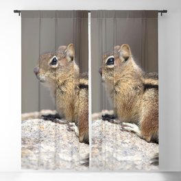 Watercolor Golden-Mantled Ground Squirrel 01, On Top of the World Blackout Curtain
