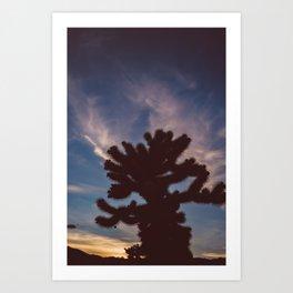 Cholla Cactus Garden VII Art Print