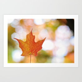 Maple leaf bokeh Art Print