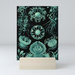 Ernst Haeckel Ascomycetes Sac Fungi Mini Art Print