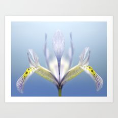 Ground Iris Art Print