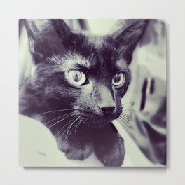 here, kitty. Metal Print