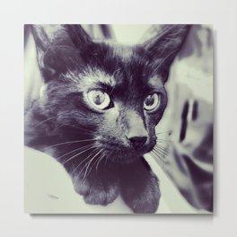 here, kitty. Metal Print