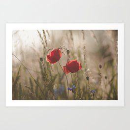 Poppy in sunrise my world Art Print
