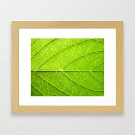 Forms of life in green Framed Art Print