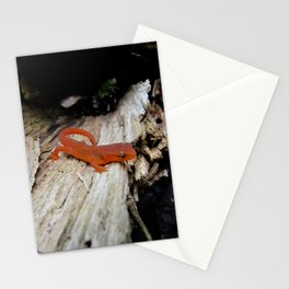 Red Newt Stationery Cards
