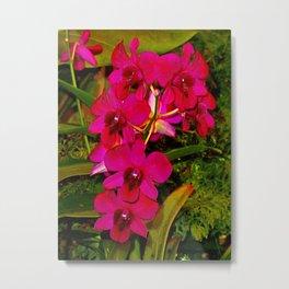 Orchid Study 21 Metal Print