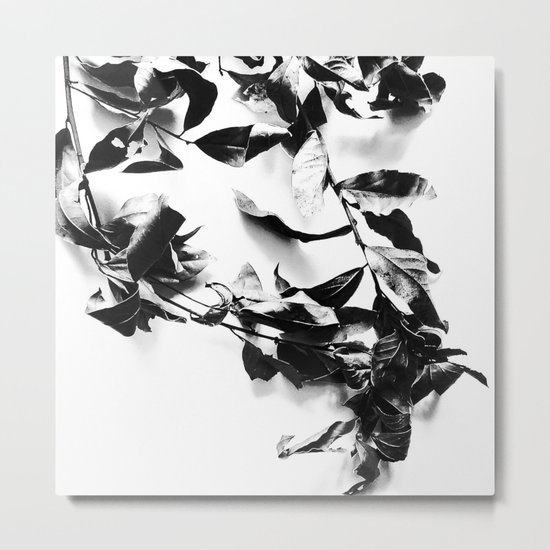 Bay leaves 4 Metal Print
