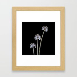 three flowers on black background Framed Art Print