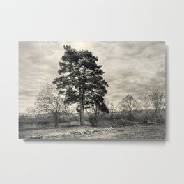 The old pine Metal Print