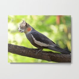 Hybrid Cat Bird Metal Print