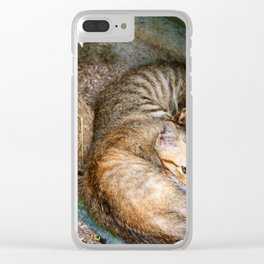 Bali Sleeping Kittens Cuddling Clear iPhone Case