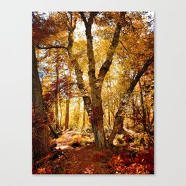Old tree bridge in Fall Canvas Print