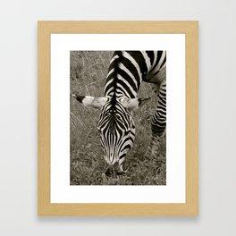 Zebra crossing Framed Art Print