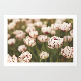 Candy Tulips Art Print