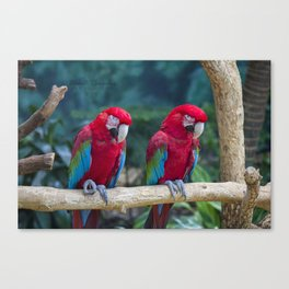 Macaws on a Branch Canvas Print