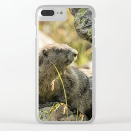 Marmot on Naches Peak Clear iPhone Case